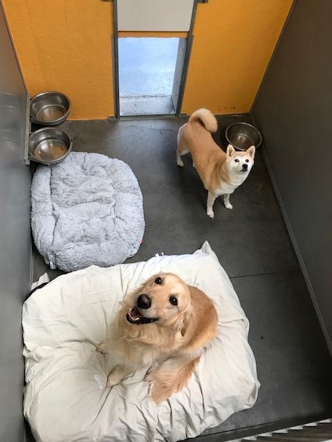 Hondenhotel Amandus gasten