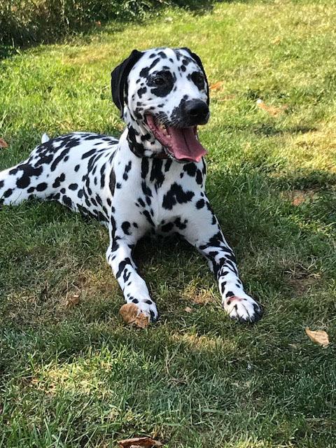Hondenhotel Amandus gast